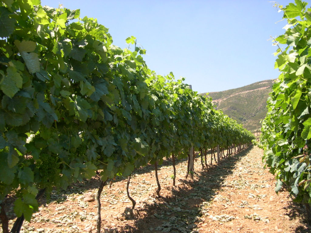 Manousakis Winery Vineyard
