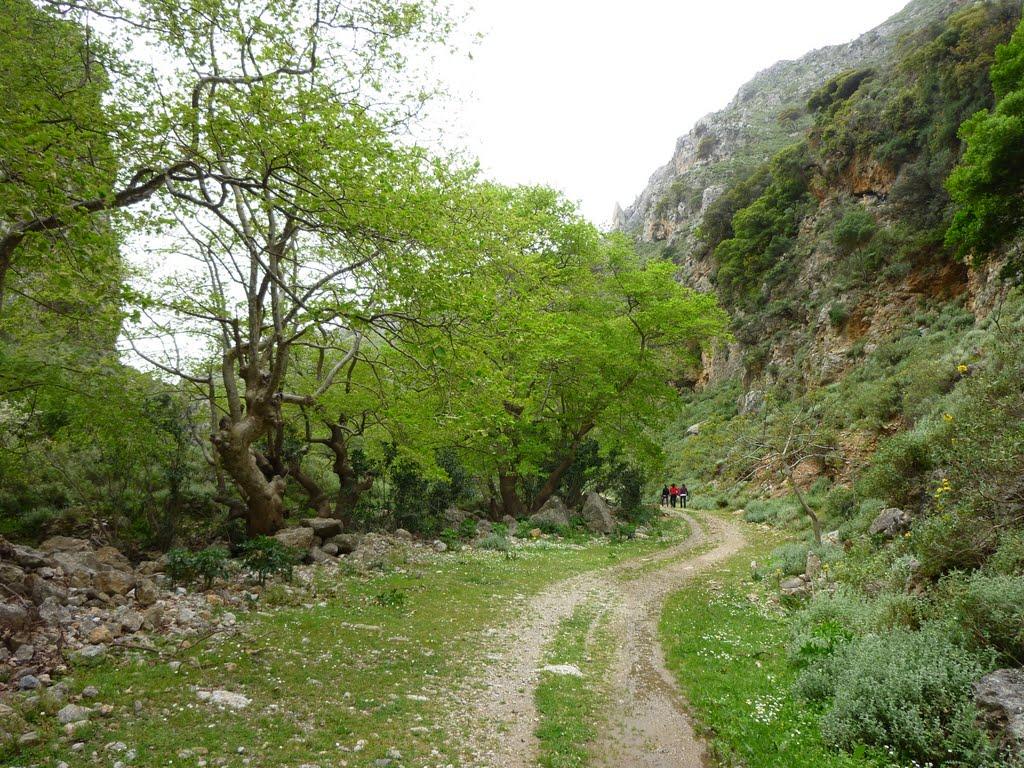 Mesavlia gorge