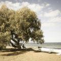 Maleme Chania Crete